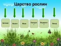Царство рослин Квіткові Папороті Хвойні Мохи Водорості Хвощі