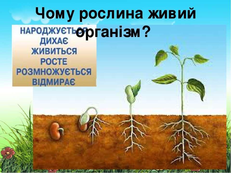 Чому рослина живий організм?