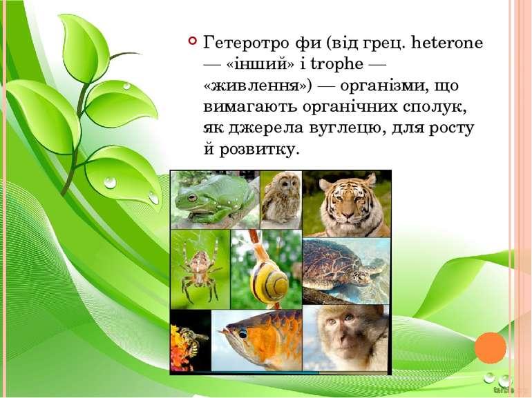 Гетеротро фи (від грец. heterone — «інший» і trophe — «живлення») — організми...