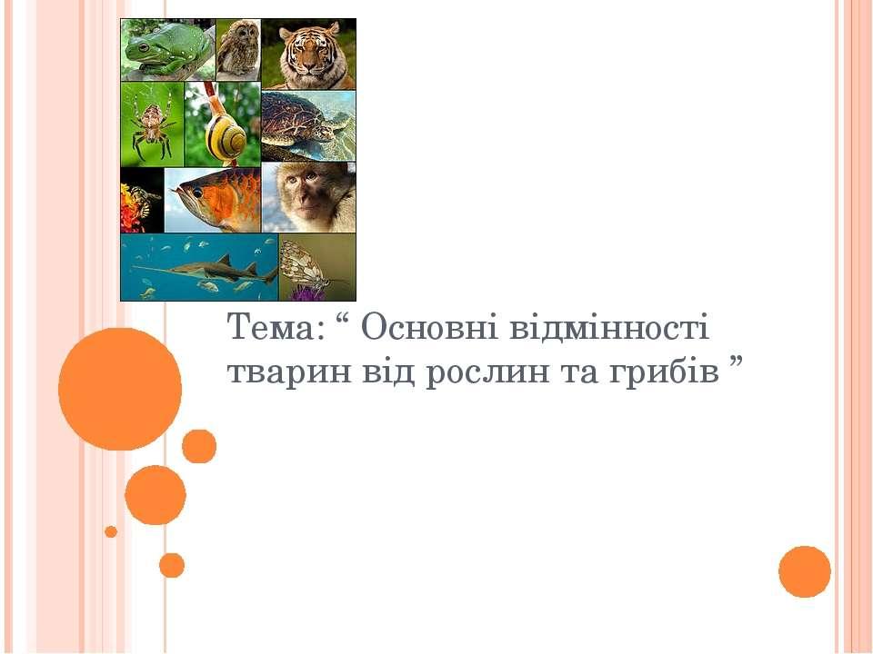 """Тема: """" Основні відмінності тварин від рослин та грибів """""""