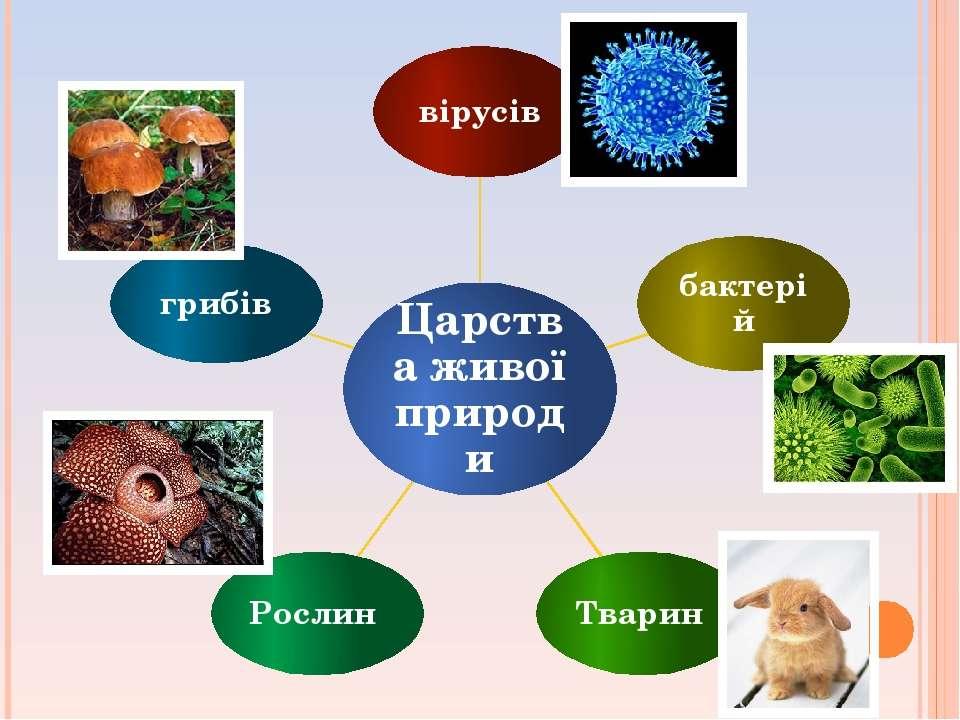 Царства живої природи вірусів бактерій Тварин Рослин грибів