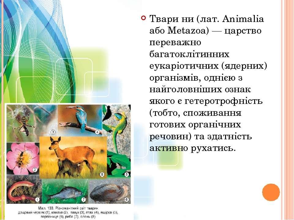 Твари ни (лат. Animalia або Metazoa) — царство переважно багатоклітинних еука...