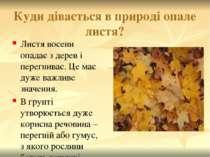 Куди дівається в природі опале листя? Листя восени опадає з дерев і перегнива...
