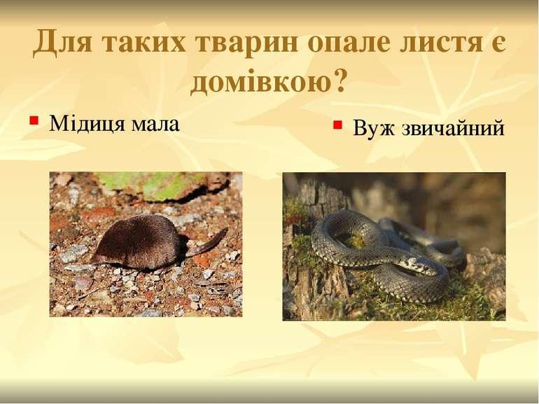 Для таких тварин опале листя є домівкою? Вуж звичайний Мідиця мала