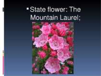 State flower: The Mountain Laurel;