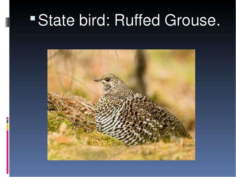 State bird: Ruffed Grouse.