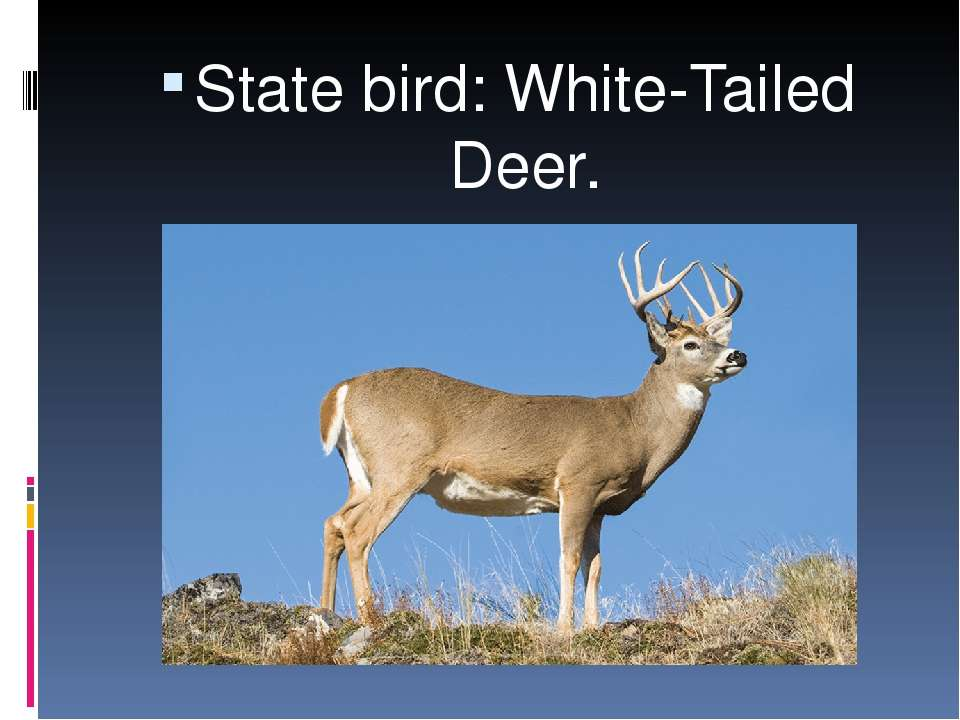State bird: White-Tailed Deer.