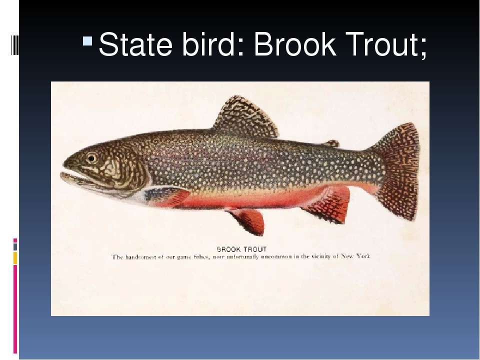 State bird: Brook Trout;