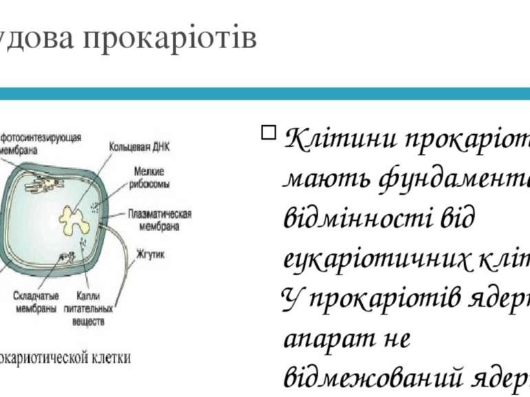 Будова прокаріотів Клітини прокаріотів мають фундаментальні відмінності від е...