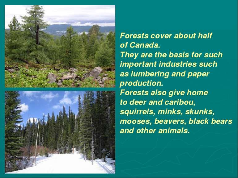 Forests cover about half of Canada. They are the basis for such important ind...