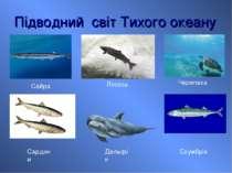 Підводний світ Тихого океану Скумбрія Сайра Сардини Черепаха Лосось Дельфін