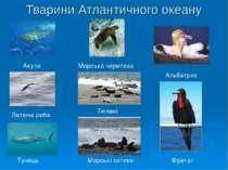 Тварини Атлантичного океану Акула Летюча риба Тунець Морська черепаха Тюлені ...