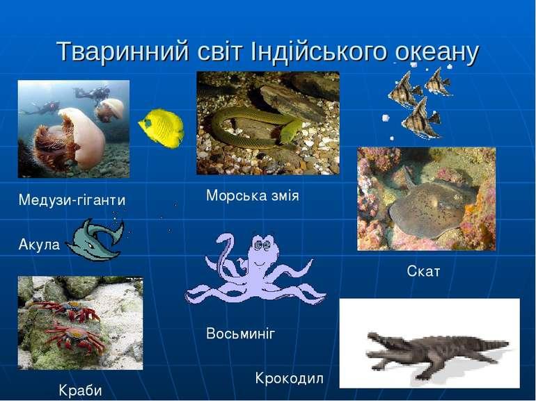 Тваринний світ Індійського океану Медузи-гіганти Краби Морська змія Восьминіг...