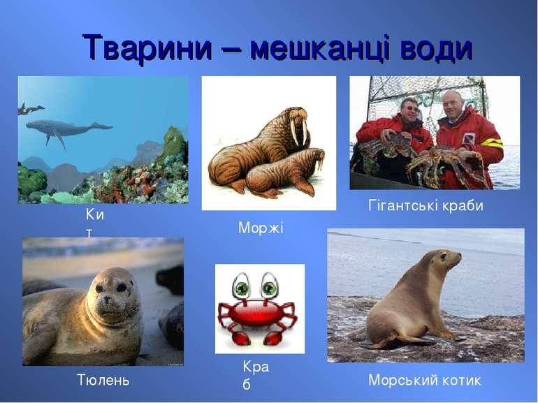 Тварини – мешканці води Кит Гігантські краби Тюлень Моржі Морський котик Краб