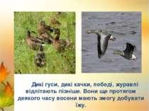 Лебеді Лелека Дикі гуси, дикі качки, лебеді, журавлі відлітають пізніше. Вони...