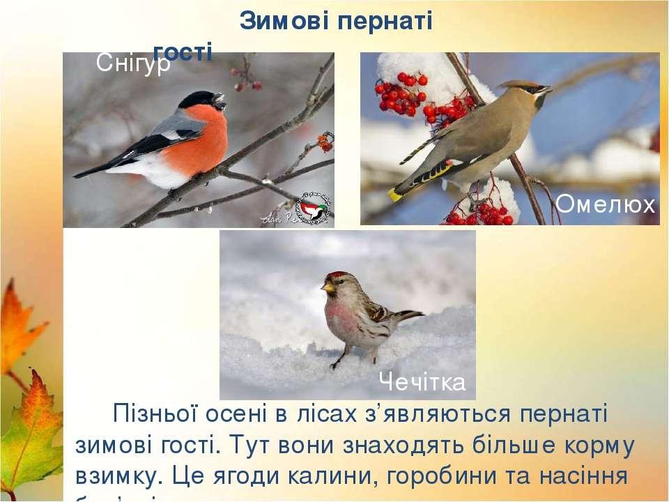 Лебеді Лелека Пізньої осені в лісах з'являються пернаті зимові гості. Тут вон...