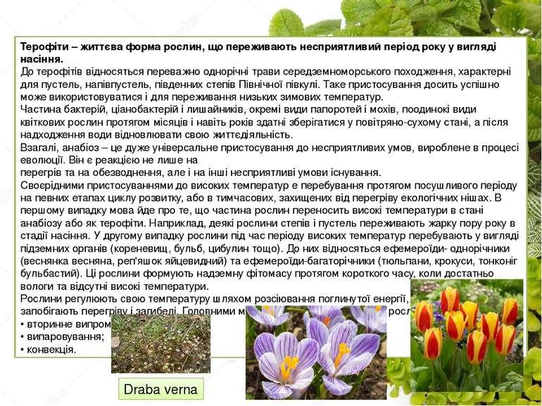 Терофіти – життєва форма рослин, що переживають несприятливий період року у в...