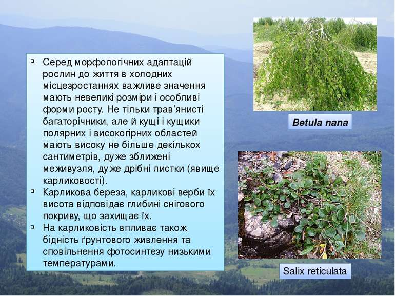 Серед морфологічних адаптацій рослин до життя в холодних місцезростаннях важл...