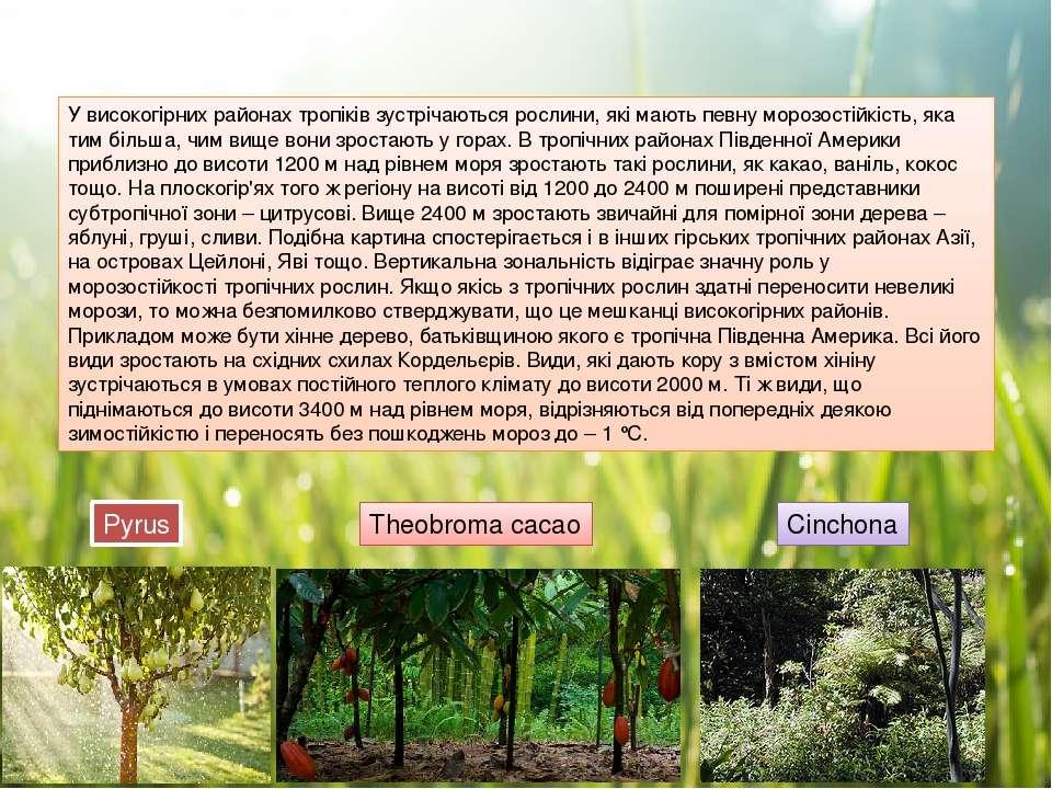 У високогірних районах тропіків зустрічаються рослини, які мають певну морозо...