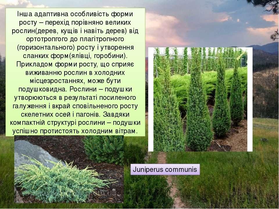 Інша адаптивна особливість форми росту – перехід порівняно великих рослин(дер...