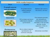Види основної тканини Види Будова Функції Хлорофілоносна (асиміляційна) Їїклі...