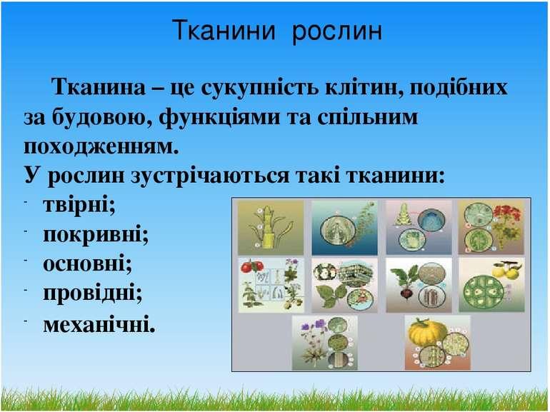 Тканини рослин Тканина – це сукупність клітин, подібних за будовою, функціями...