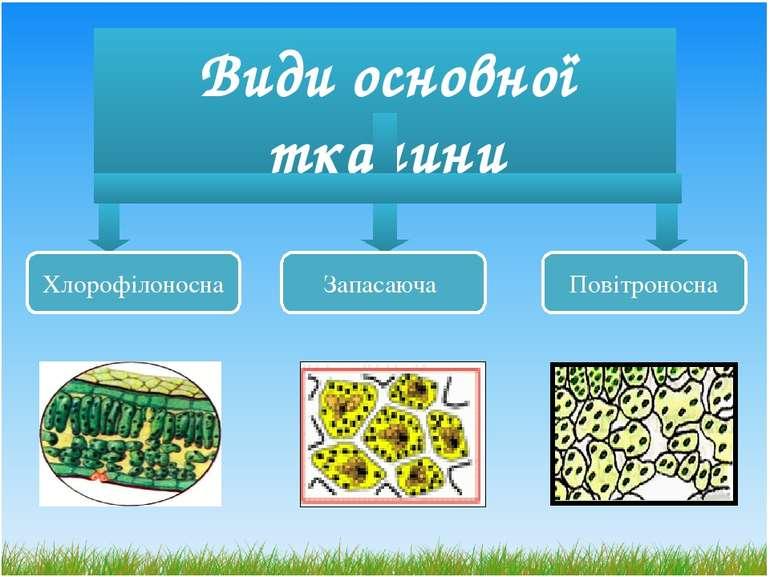 Види основної тканини Хлорофілоносна Повітроносна Запасаюча