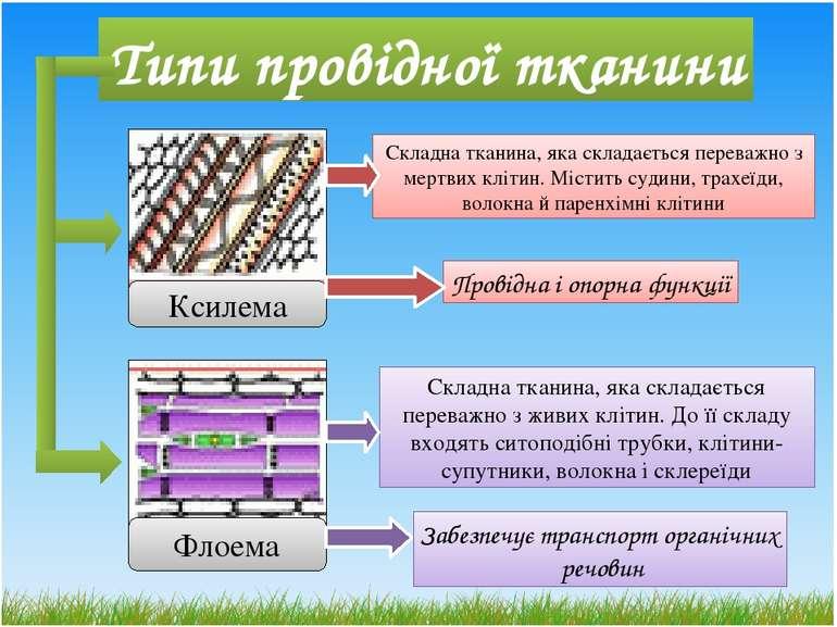 Типи провідної тканини Флоема Ксилема Складна тканина, яка складається перева...