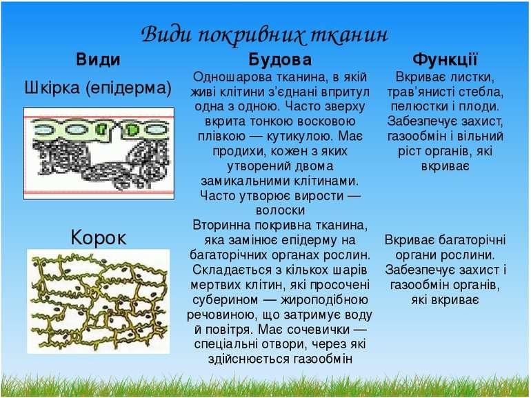 Види покривних тканин Види Будова Функції Шкірка (епідерма) Одношароватканина...