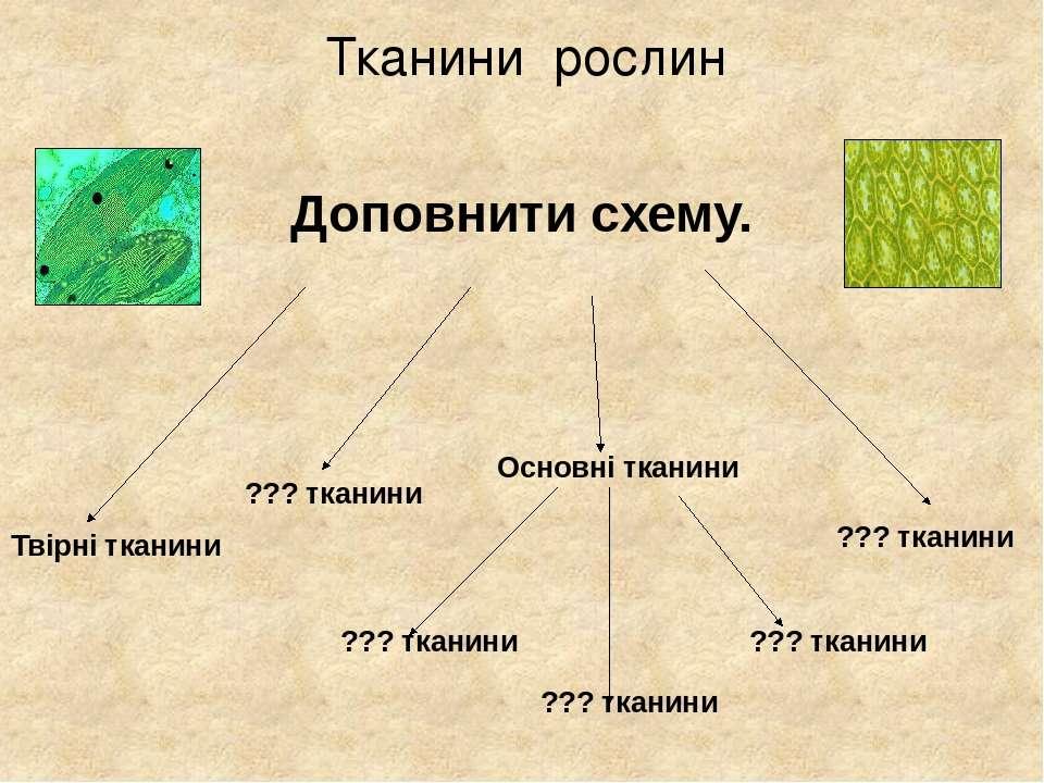 Тканини рослин Доповнити схему. Твірні тканини ??? тканини ??? тканини Основн...