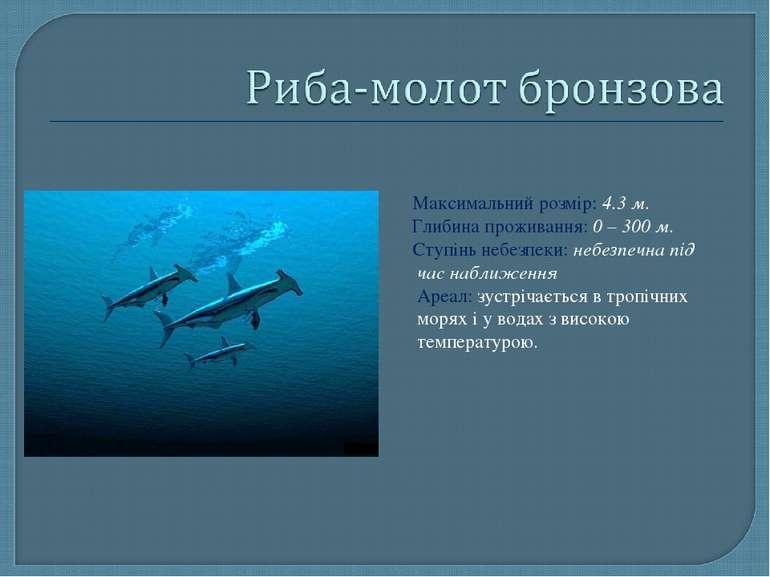 Максимальний розмір: 4.3 м. Глибина проживання: 0 – 300 м. Ступінь небезпеки:...