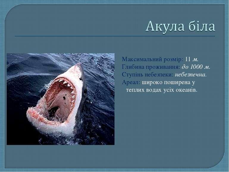 Максимальний розмір: 11 м. Глибина проживання: до 1000 м. Ступінь небезпеки: ...