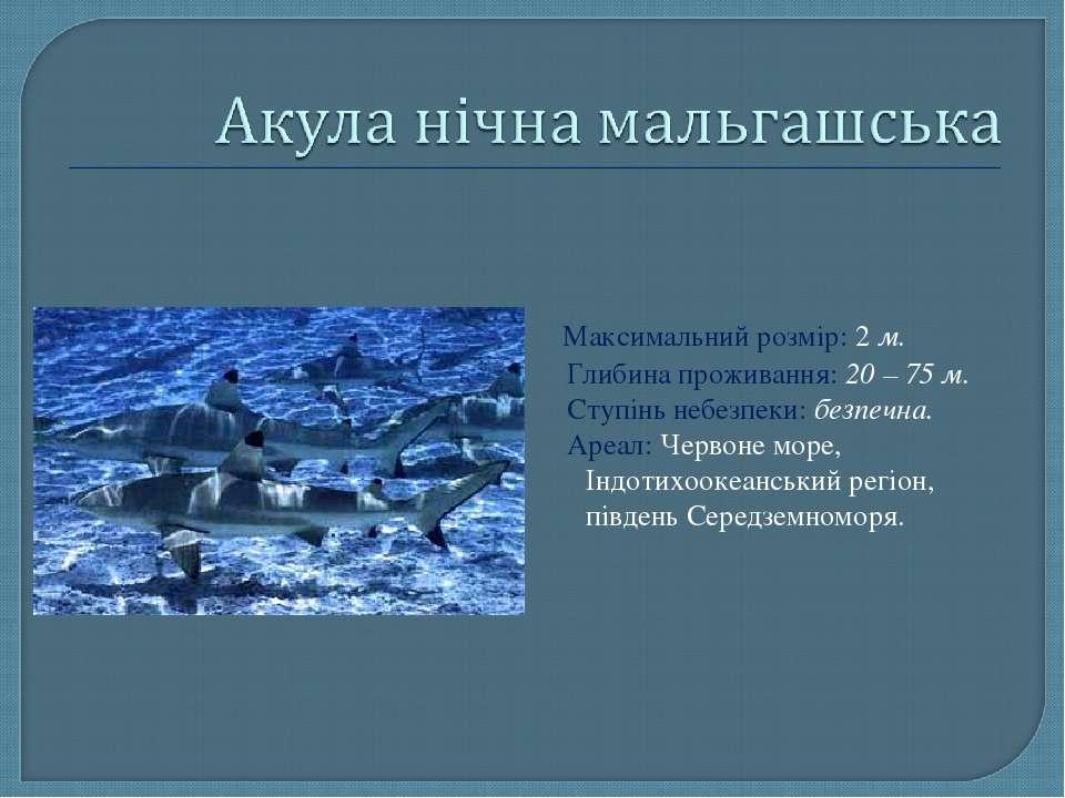 Максимальний розмір: 2 м. Глибина проживання: 20 – 75 м. Ступінь небезпеки: б...