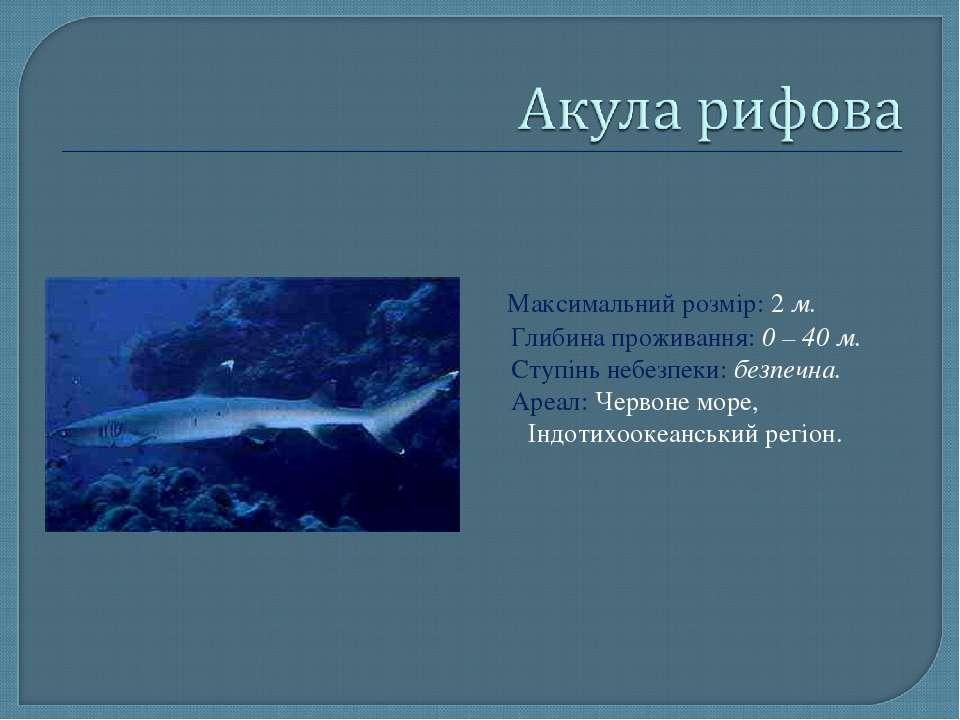 Максимальний розмір: 2 м. Глибина проживання: 0 – 40 м. Ступінь небезпеки: бе...