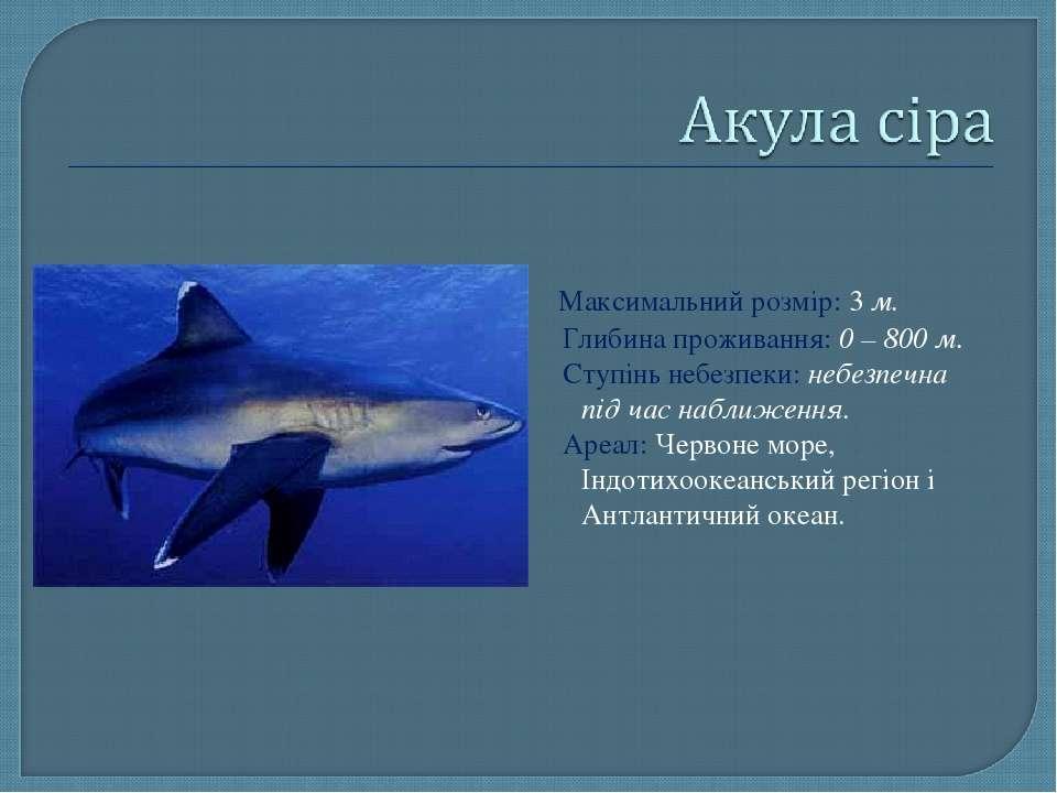 Максимальний розмір: 3 м. Глибина проживання: 0 – 800 м. Ступінь небезпеки: н...