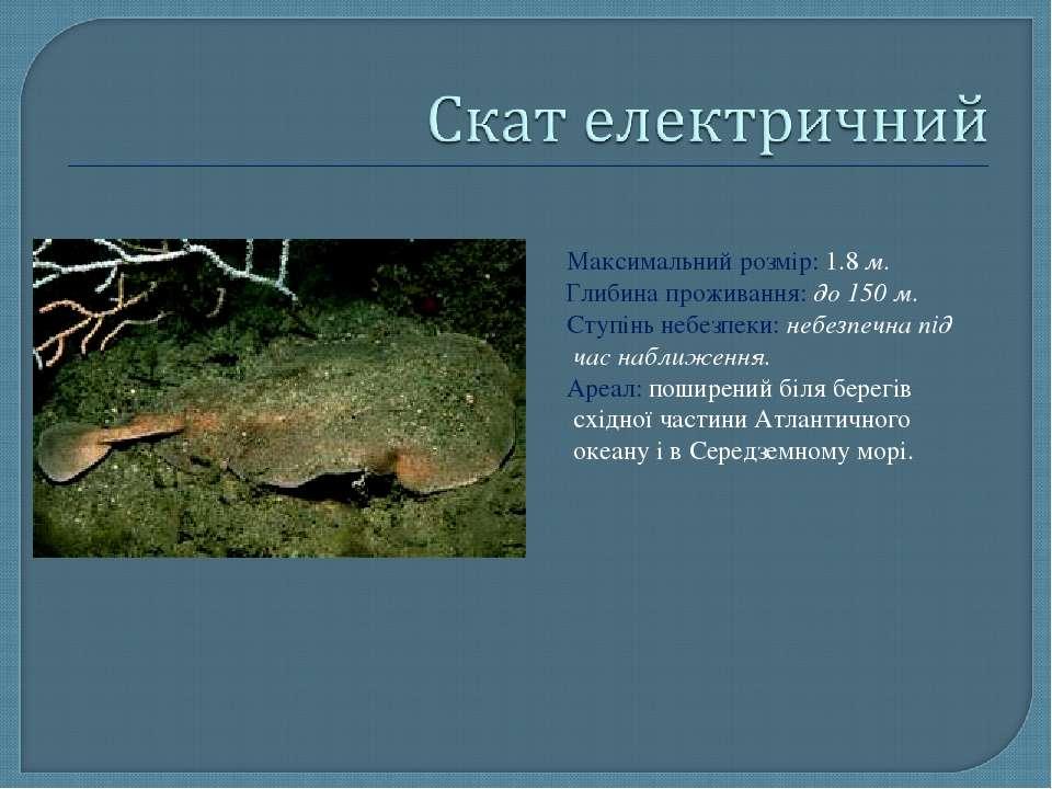 Максимальний розмір: 1.8 м. Глибина проживання: до 150 м. Ступінь небезпеки: ...