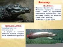 ЧЕРНЫЙ КАЙМАН самый крупный вид аллигаторовых и второе по величине животное Ю...