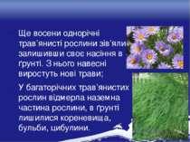 Ще восени однорічні трав'янисті рослини зів'яли, залишивши своє насіння в ґру...
