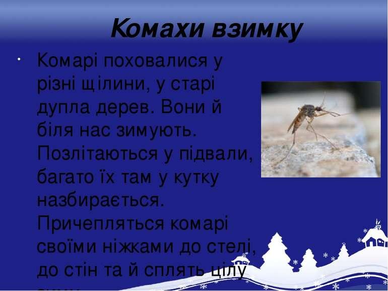 Комахи взимку Комарі поховалися у різні щілини, у старі дупла дерев. Вони й б...