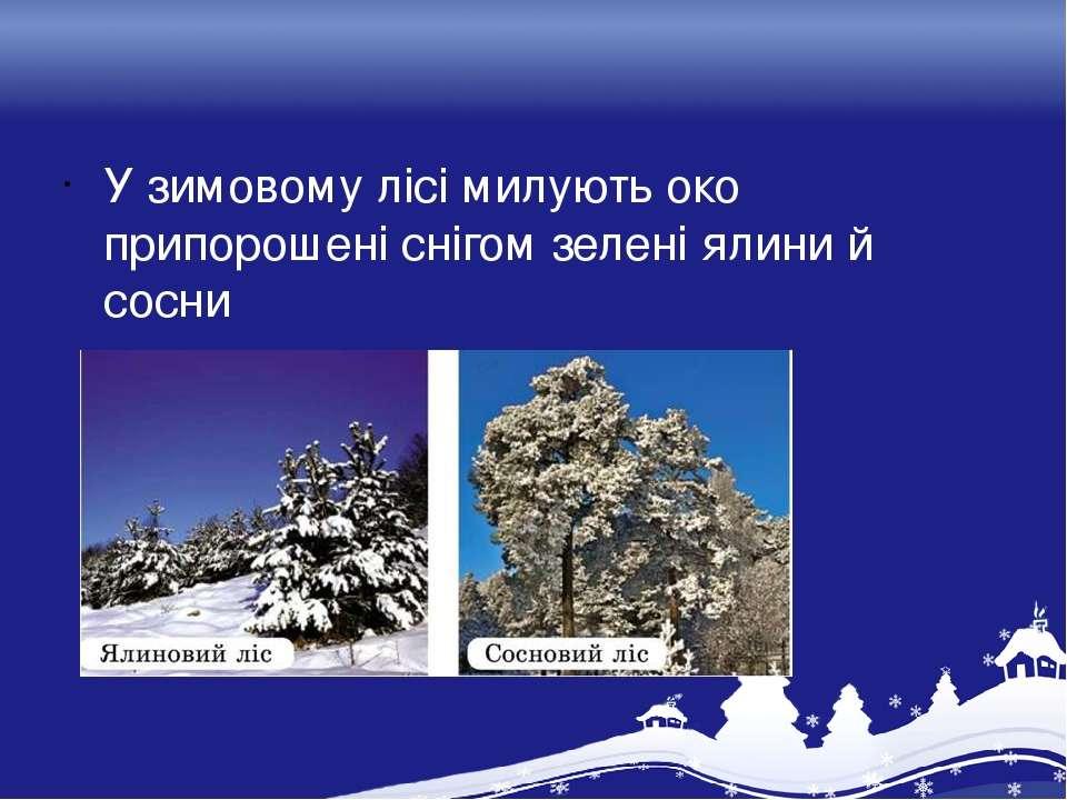 У зимовому лісі милують око припорошені снігом зелені ялини й сосни