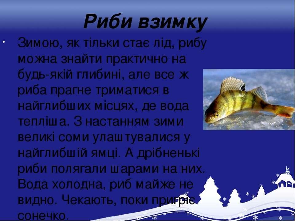 Риби взимку Зимою, як тільки стає лід, рибу можна знайти практично на будь-як...