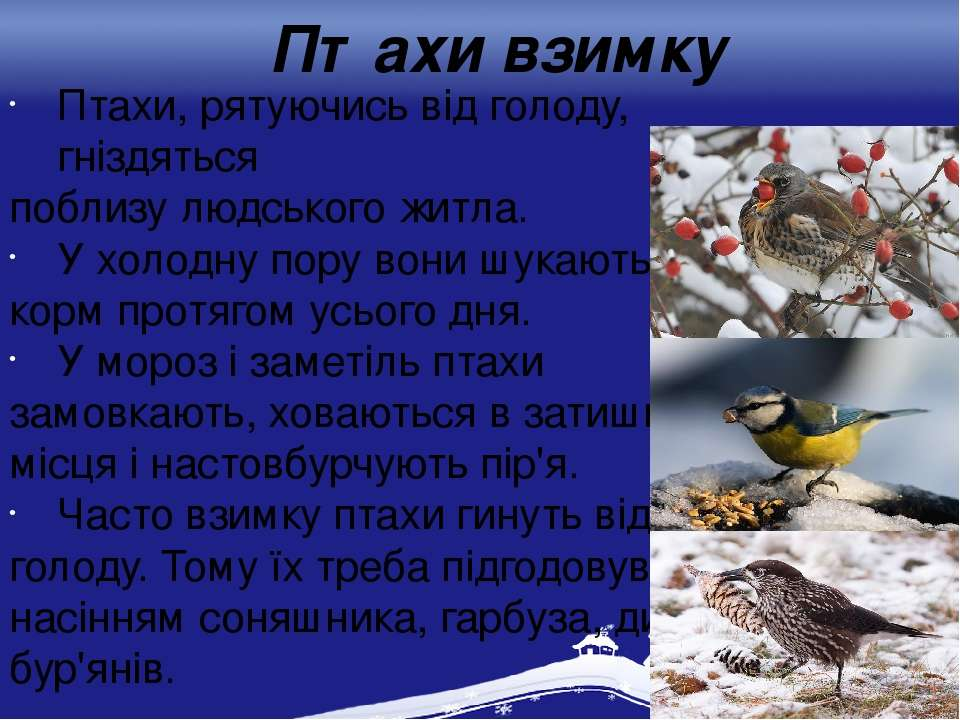 Птахи взимку Птахи, рятуючись від голоду, гніздяться поблизу людського житла....