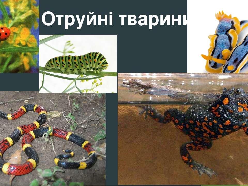 Отруйні тварини