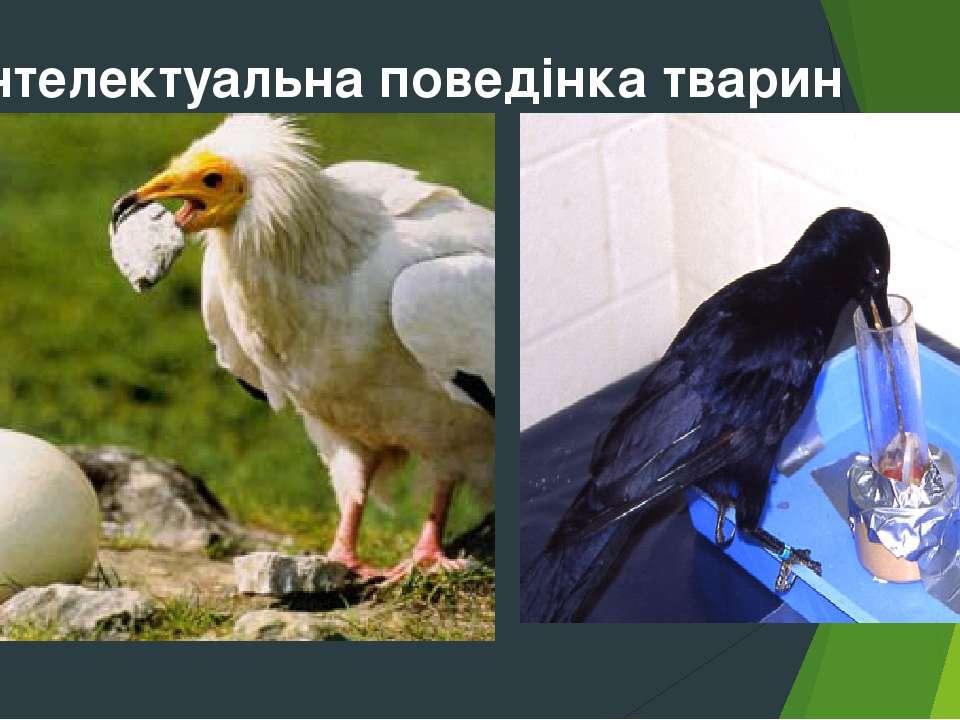 Інтелектуальна поведінка тварин