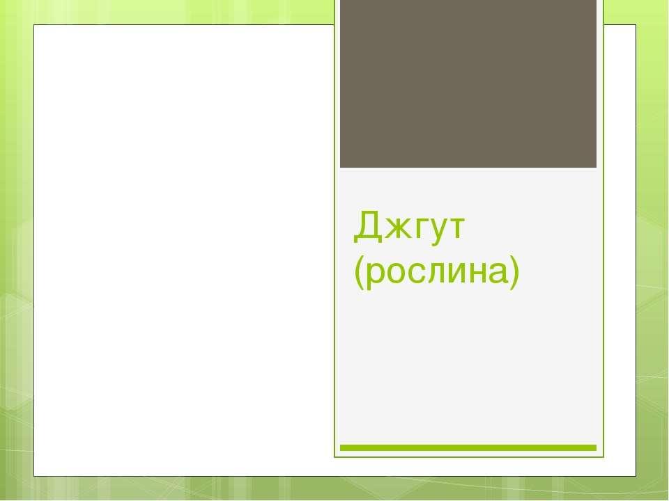 Джгут (рослина)
