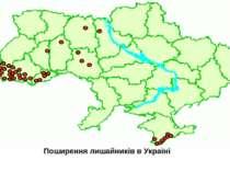 Поширення лишайників в Україні