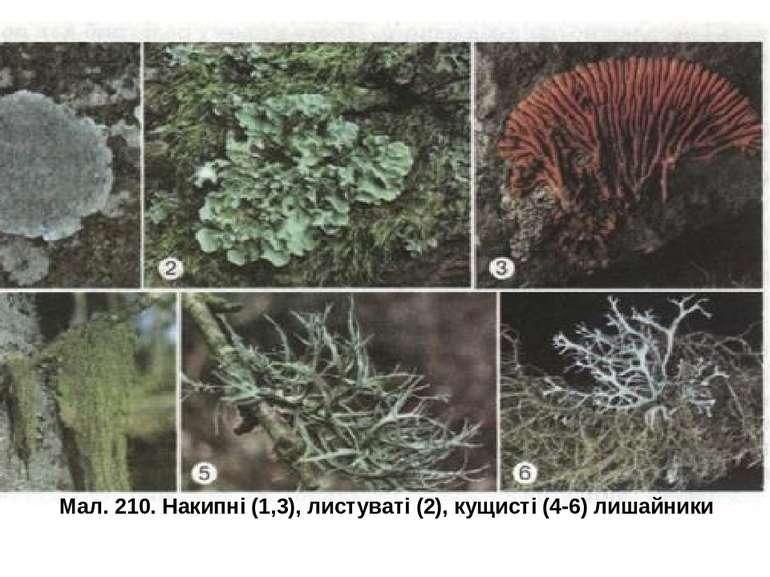 Мал. 210. Накипні (1,3), листуваті (2), кущисті (4-6) лишайники