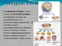 Стовбурові клітини Стовбурові клітини, також відомі як штамові клітини— це п...