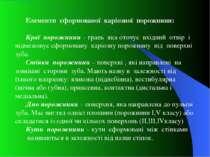 Елементи сформованої каріозної порожнини: Краї порожнини – грань яка оточує...