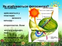 Фотосинтез здійснюється у пластидах зеленого кольору - хлоропластах. Вони міс...